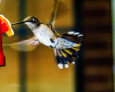 Photograph - Hummingbird - In Flight - Just A Sip by Barry Jones
