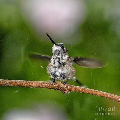 Hummingbird Photograph - Just A Sittin' In The Rain by Betty LaRue
