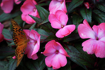 Art Print featuring the photograph Just A Small Taste For This Butterfly by Thomas Woolworth