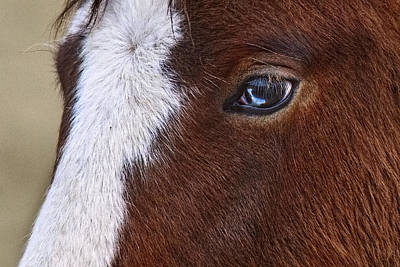 Forelock Photograph - Just A Touch Of Blue by Wes and Dotty Weber