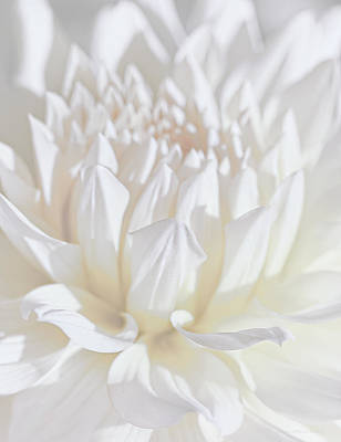 Photograph - Just A Whisper White Dahlia Flower by Jennie Marie Schell