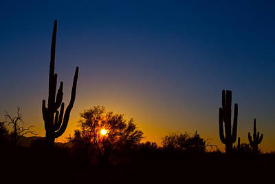 Bo Insogna Photograph - Just Another Sonoran Desert Sunrise by James BO  Insogna