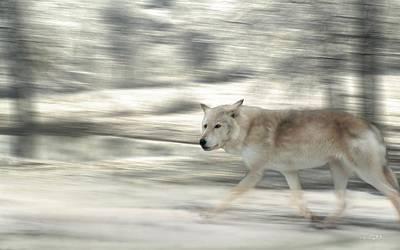 Becky's Wolf Original by Bill Stephens