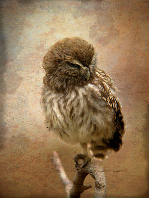 Just Awake Little Owl Art Print by Perry Van Munster