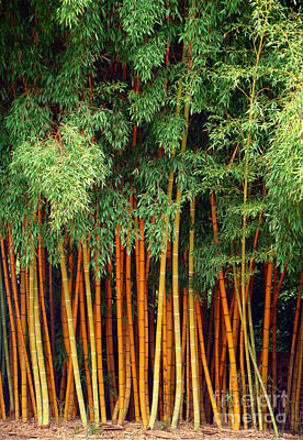 Just Bamboo Art Print by Sue Melvin