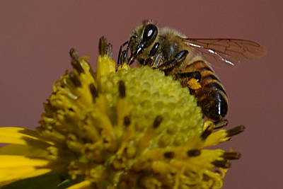 Photograph - Just Bee by Brad Thornton