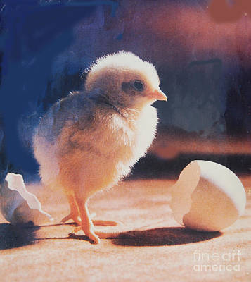 Painting - Just Born by Ragunath Venkatraman