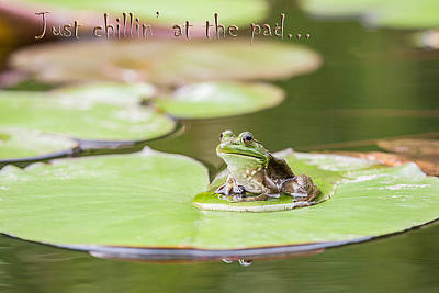 Just Chillin At The Pad Art Print by Jeff Abrahamson