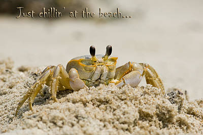 Just Chillin On The Beach Art Print by Jeff Abrahamson