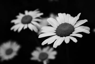 Photograph - Just Daisies by Robin Mahboeb