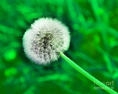 Photograph - Just Dandy Green by Andee Design