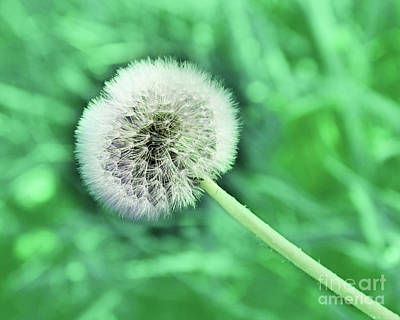 Photograph - Just Dandy Mint Green by Andee Design