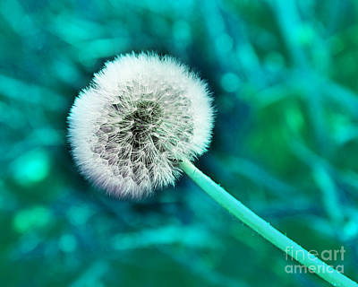 Photograph - Just Dandy Teal by Andee Design