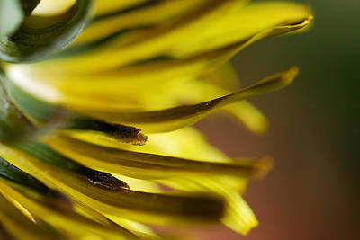 Photograph - Just Dandy by Wendy Wilton
