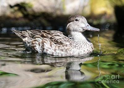 Target Threshold Photography - Just Ducky by Carol Groenen