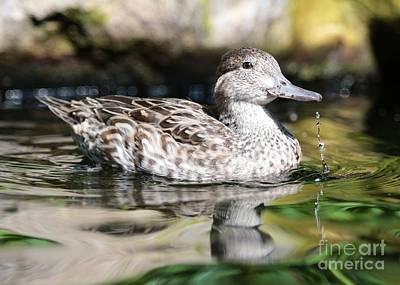 Just Ducky Art Print by Carol Groenen