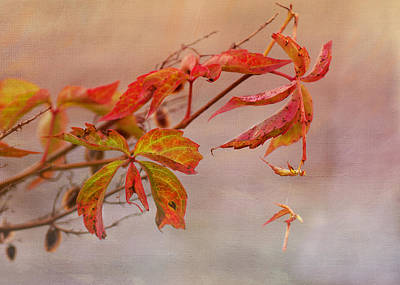 Falling Leaf Photograph - Just Fall by Susan Capuano