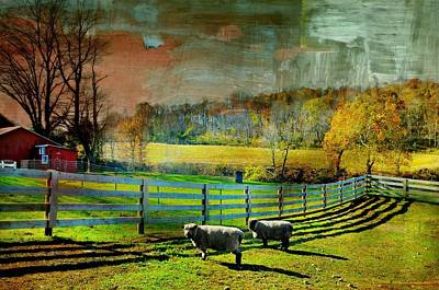 Photograph - Just For Wool by Diana Angstadt