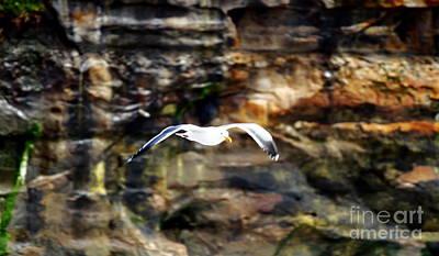Photograph - Just Gliding by Theresa Ramos-DuVon