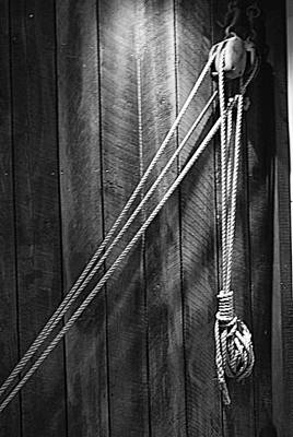 Photograph - Just Hangin' Around - Bw by Marilyn Wilson