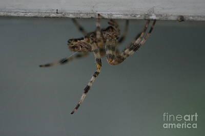 Photograph - Just Hangin' by Lorelle Gromus