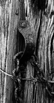 Photograph - Just Hanging Around by Haren Images- Kriss Haren