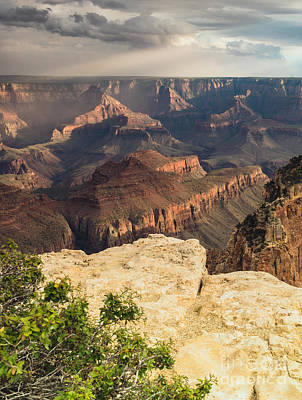Photograph - Grand Canyon North Rim by Tamara Becker