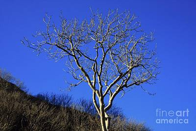 Photograph - Just One Tree by Jeremy Hayden
