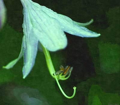 Just Opened White Flower On Adew Laden Morning  Art Print by Rosemarie E Seppala