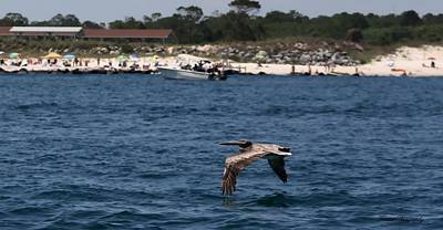 Panama City Beach Photograph - Just Passing By  by Debra Forand
