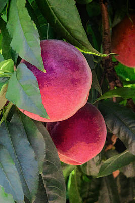 Digital Art - Just Peaches by Photographic Art by Russel Ray Photos