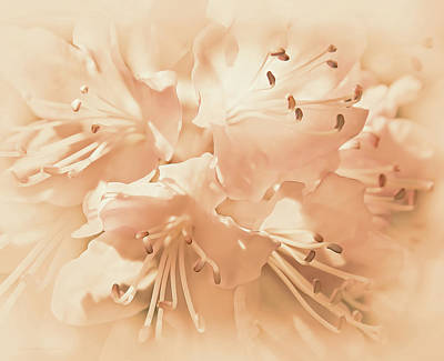 Just Peachy Azalea Flowers Art Print by Jennie Marie Schell
