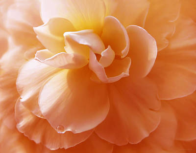 Photograph - Just Peachy Begonia Flower by Jennie Marie Schell