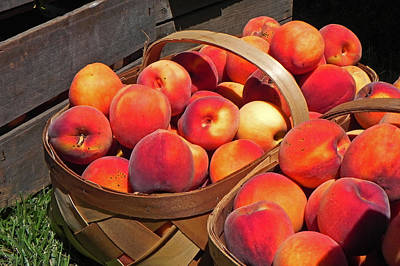 Photograph - Just Peachy by Bill Swartwout