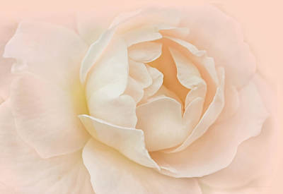 Photograph - Just Peachy Rose Flower by Jennie Marie Schell