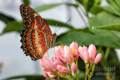 Just Pink Butterfly Art Print by Shari Nees