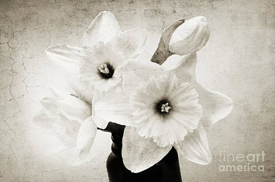 Photograph - Just Plain Daffy 1 B W - Flora - Spring - Daffodil - Narcissus - Jonquil by Andee Design