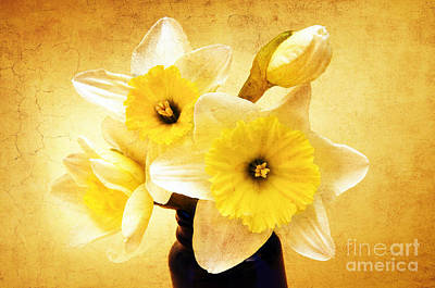Just Plain Daffy 1 - Flora - Spring - Daffodil - Narcissus - Jonquil Art Print by Andee Design