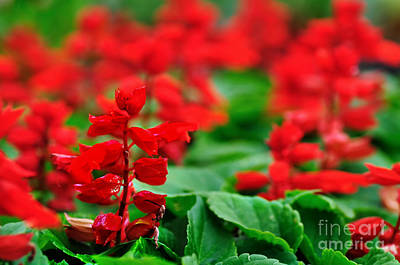 Just Red Art Print by Kaye Menner