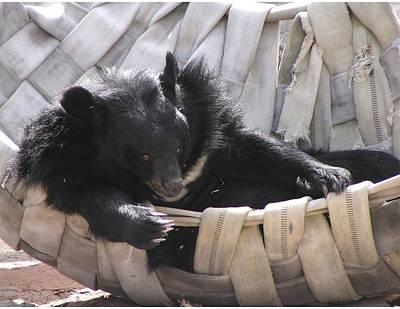 Photograph - Just Relaxing In My Hammock by Diane Alexander