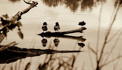 Photograph - Just The Three Of Us by Kathy Sampson