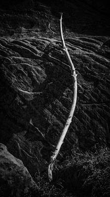 Photograph - Just Waiting by David Waldrop