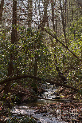 Photograph - Justus Creek by Paul Rebmann
