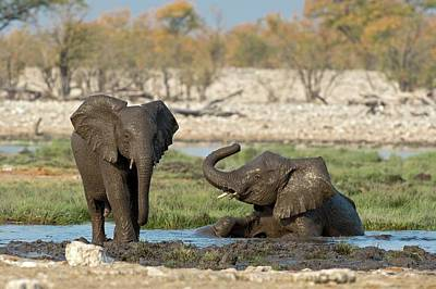 Water Play Photograph - Juvenile African Elephants At Play by Tony Camacho