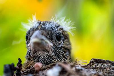Juvenile Mockingbird Original
