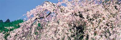 Jyoshokou-ji Kyoto Japan Art Print by Panoramic Images