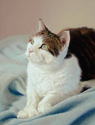 Domestic Short Hair Cat Painting - K C  Kitty Cat by Barbara Groff