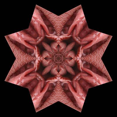 Photograph - K4646b Sexual Mandala For Erotic Spirituality by Chris Maher