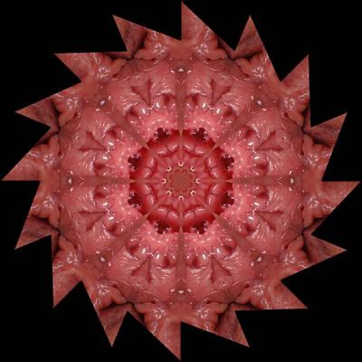 Photograph - K4651b Sexual Mandala For Erotic Spirituality by Chris Maher