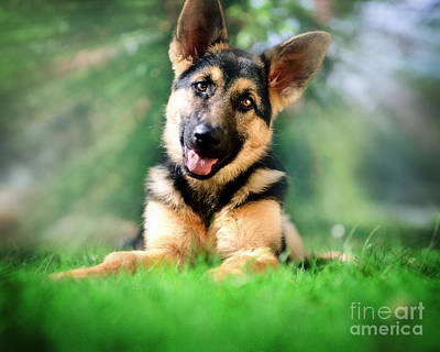 Photograph - K9 Cute by Edmund Nagele
